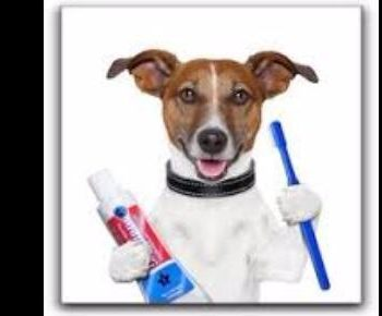 Dog Toothbrush Cleaning
