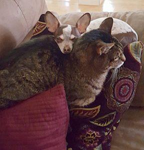 tahoe emergency pet care
